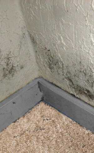 Remove Household Mold in PA